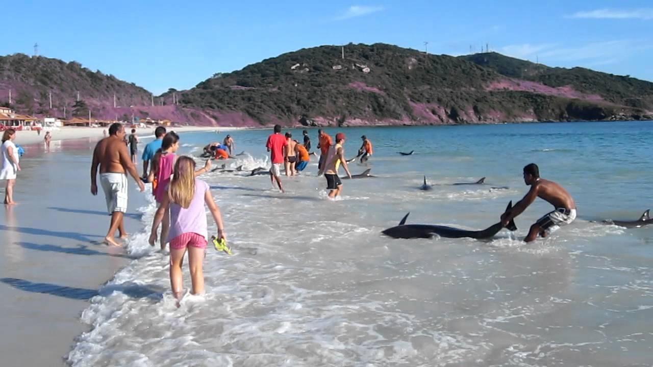 Люди и дельфины, извечная дружба.