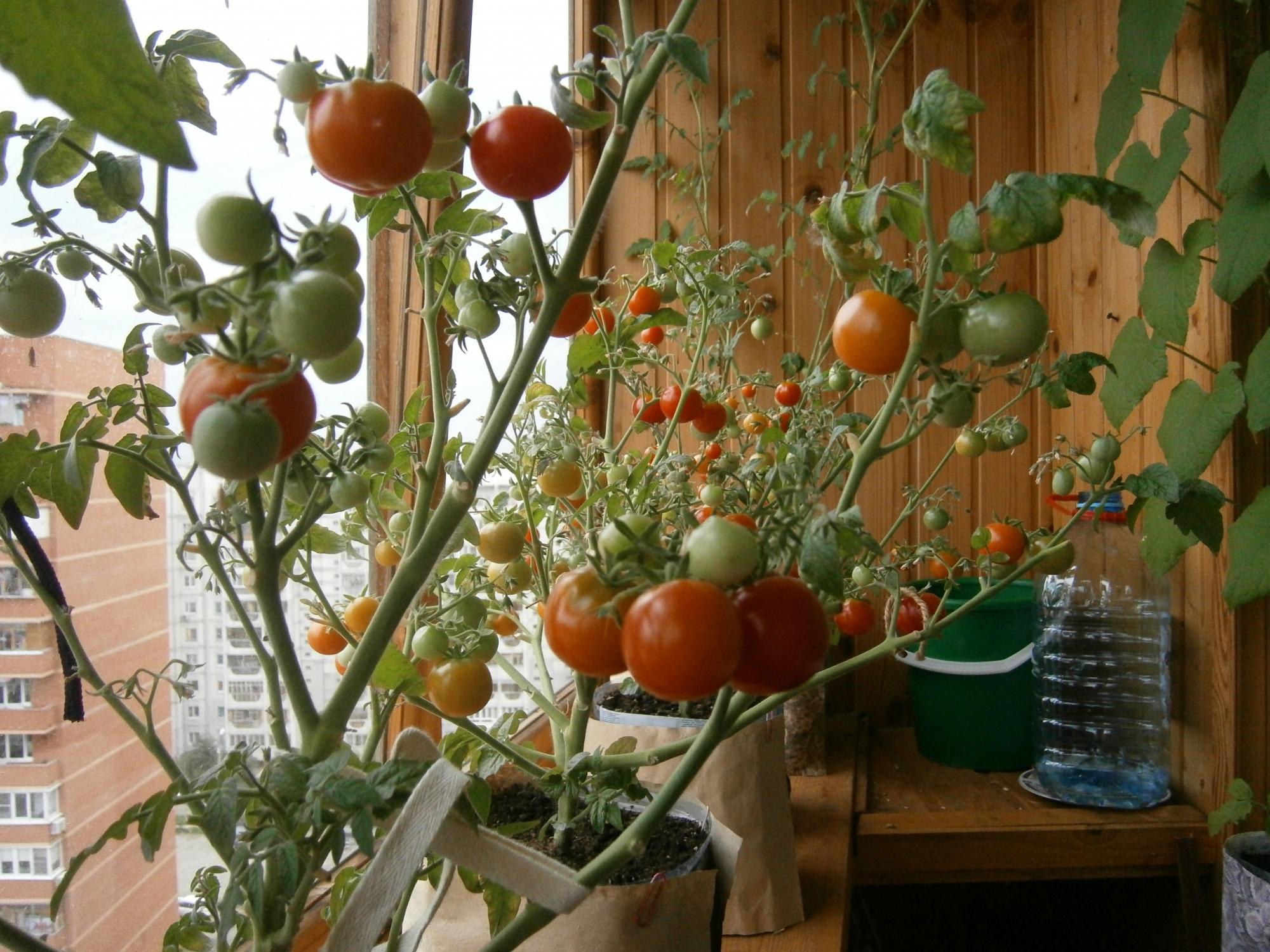 Мой балконный огород )))