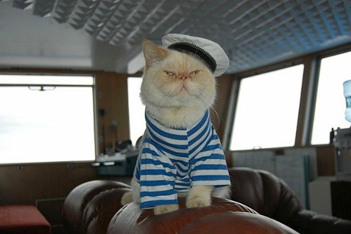 Петербургский кот Матрос