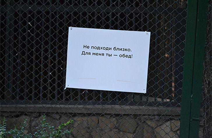 Позитив из зоопарка
