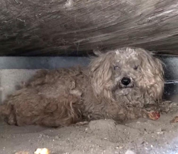 Спасение собаки, которая год ждала возвращения своего умершего хозяина