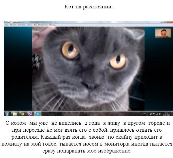 Злопамятный кот