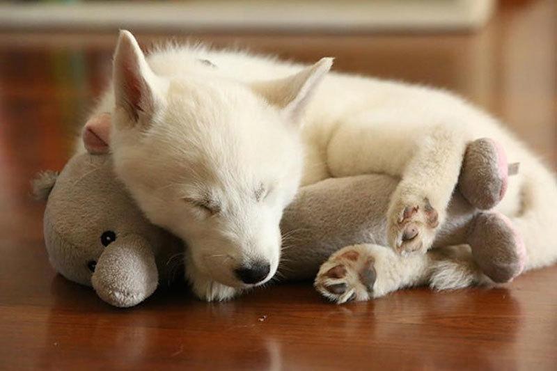 Животные, обнимающие мягкие игрушки