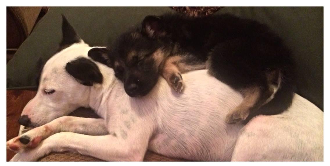 Он любит своего старшего брата так