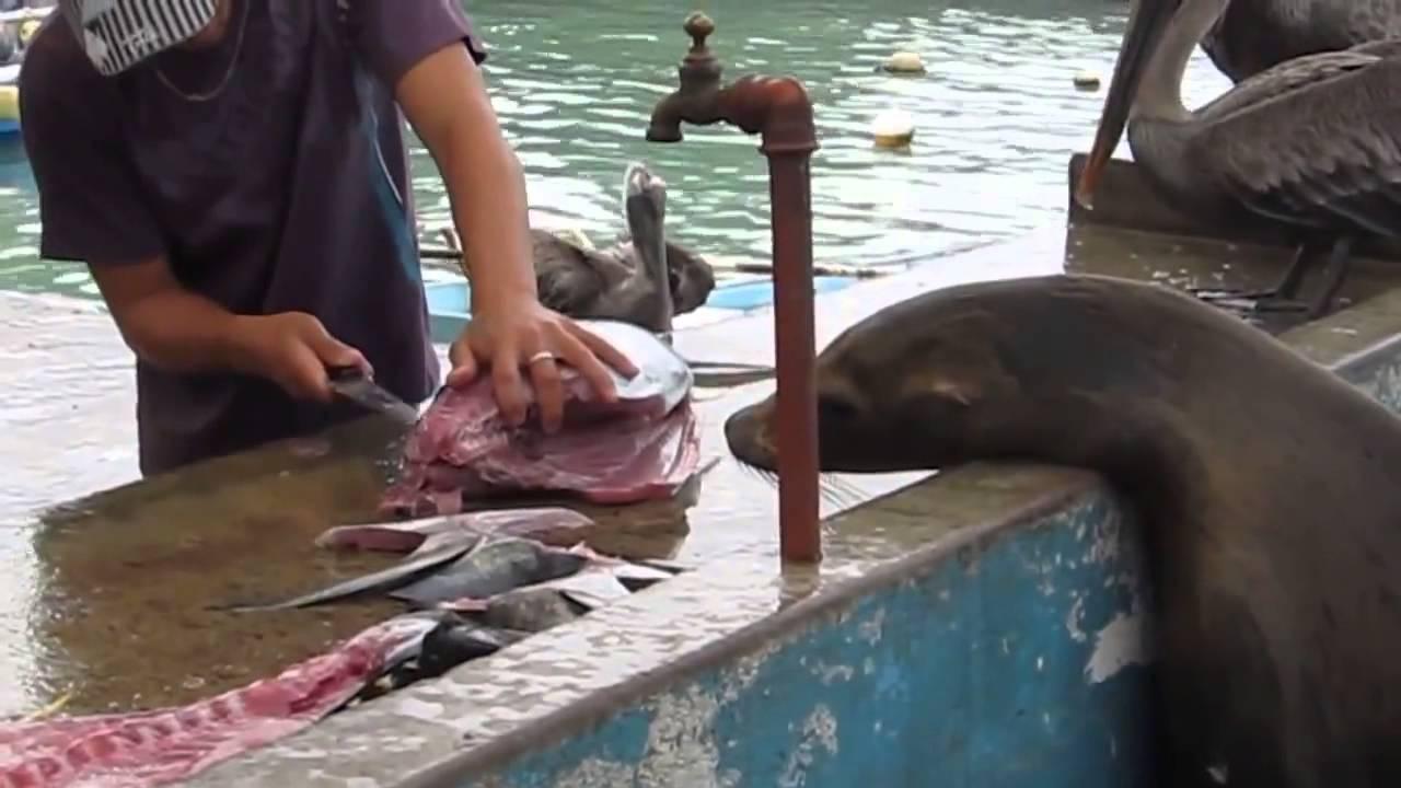 Торговцам рыбой нужно быть начеку