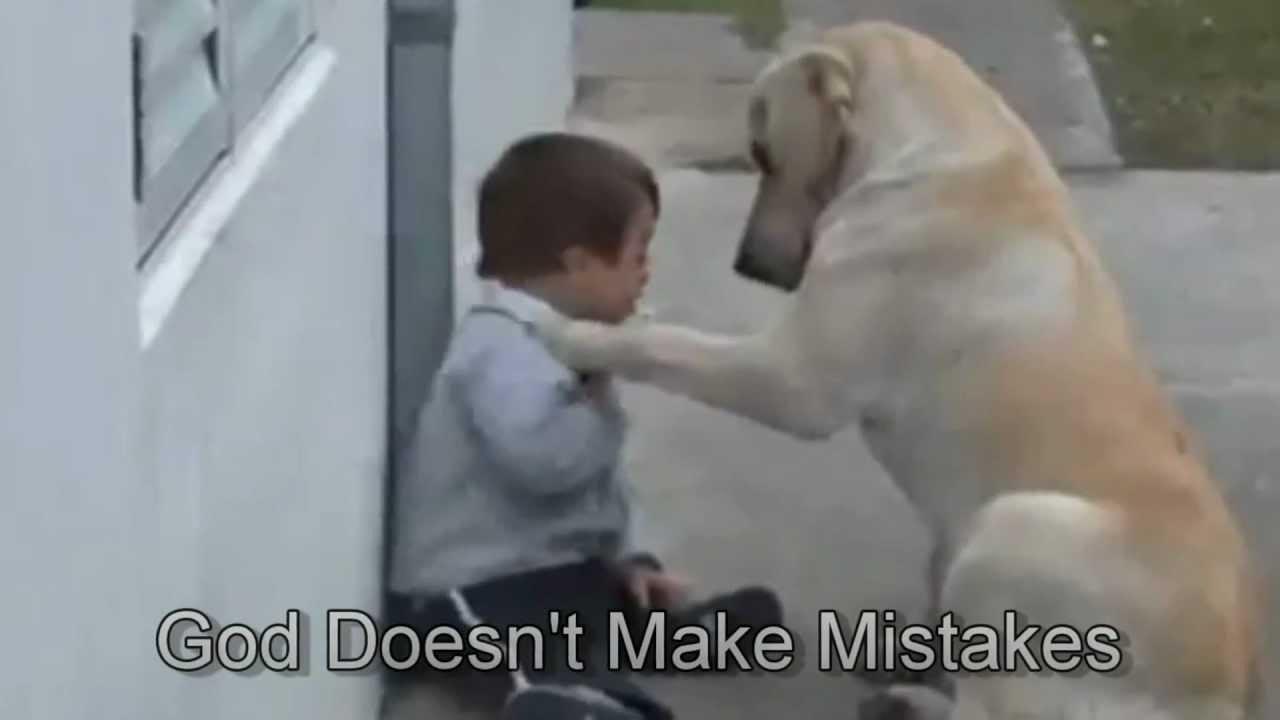 Пес пытается подружиться с ребенком у которого синдром дауна