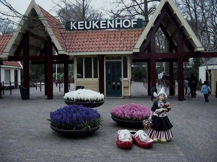 Парк тюльпанов в Голландии