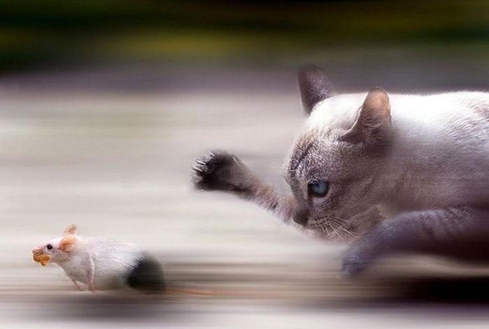 Фотографии животных, сделанные в нужный момент