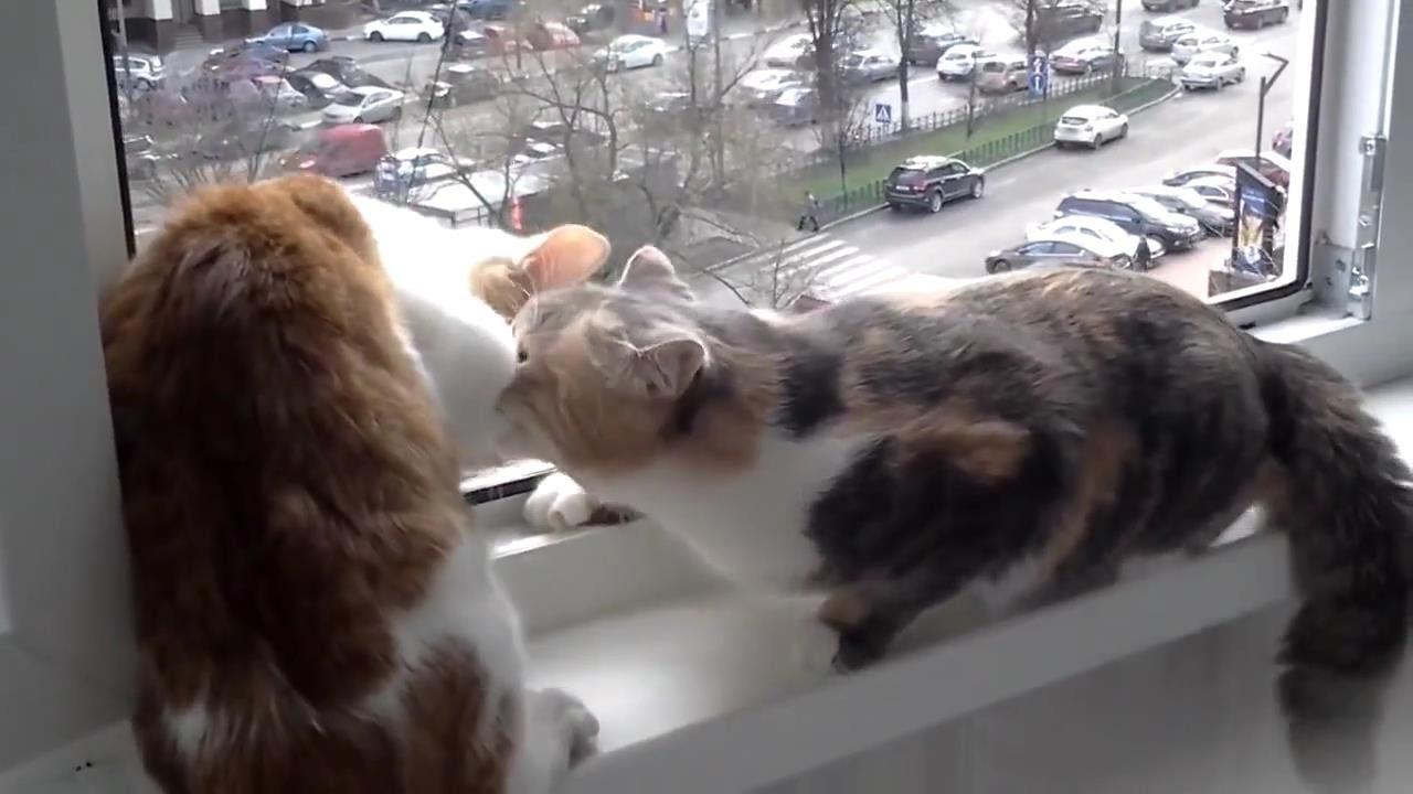 Кошка - паникер