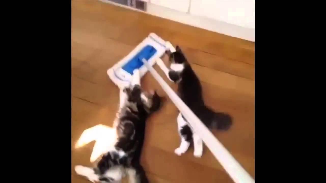 котята катаются