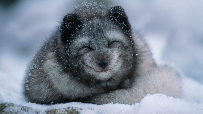 Пережить зиму. Эти животные знают, как