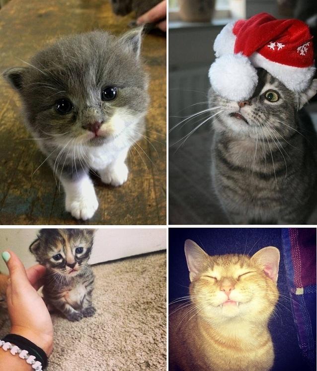 23 фотографии котиков, которые растопят ваше сердце