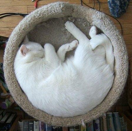Как удобно спать в коробке