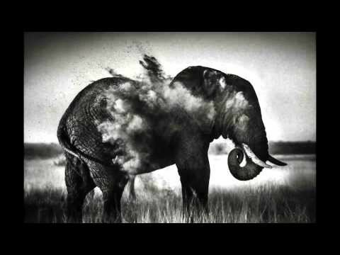 Дикая Африка в фотографиях Лорана Бау