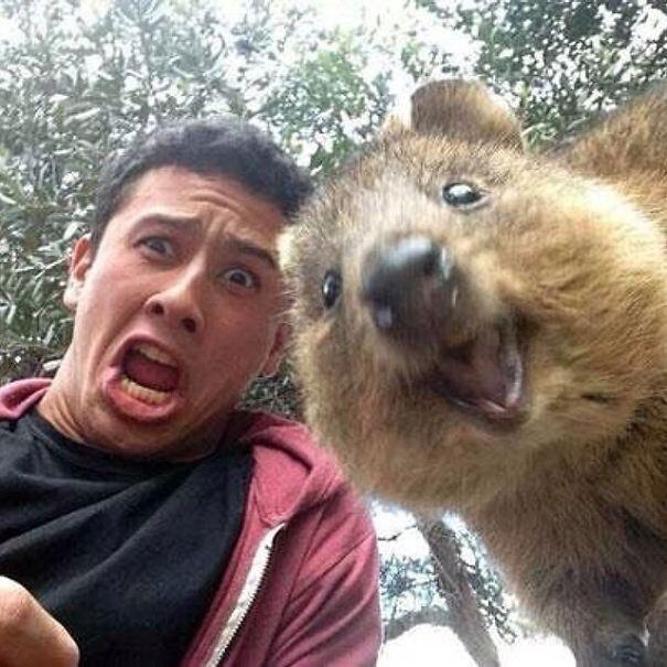 Селфи с Короткохвостым кенгуру (Quokka)