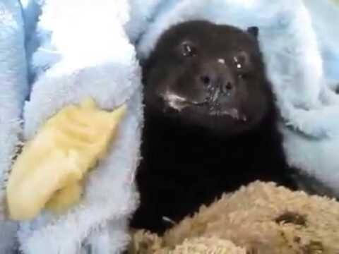 Летучая мышь ест банан