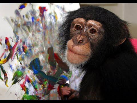 Какие картины рисует шимпанзе-художник?