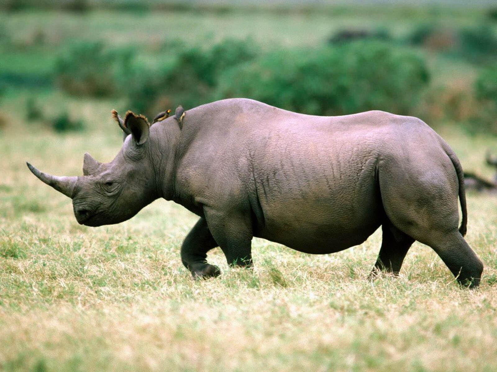 Животные, которые вымерли за последние 20 лет