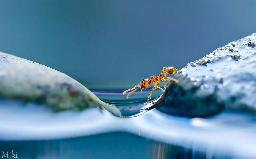 """Капля воды"". Макросъемка от Miki Asai"