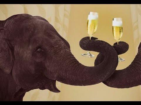Алкоголь для слонов зимой! Даже слоны в России пьют водку