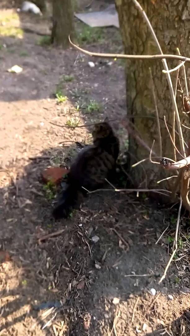 Котейка охотник
