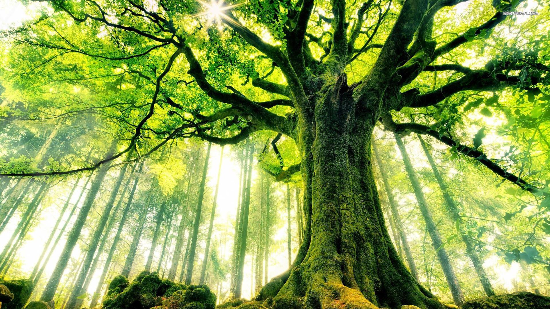 В мире гигантов: растения