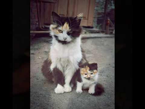 Кошкам-мамам посвящается