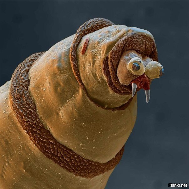 Микрофотография дождевого червя