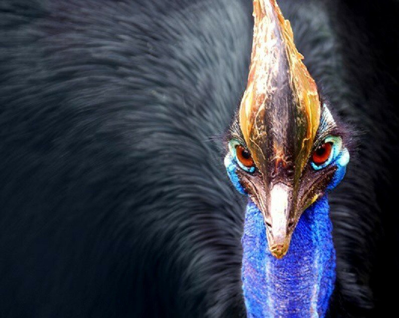 Пятёрка самых опасных птиц