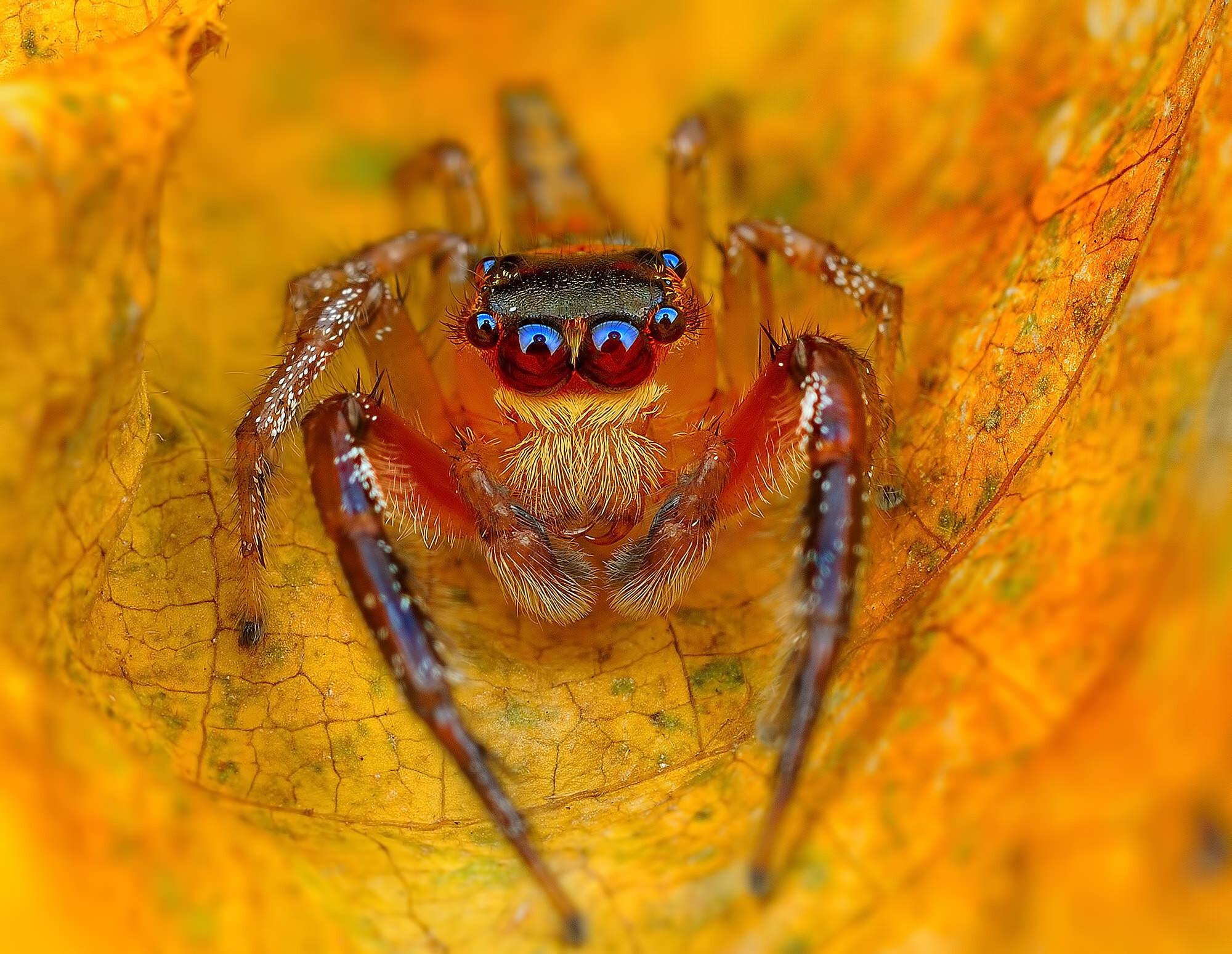 Макрофотографии насекомых