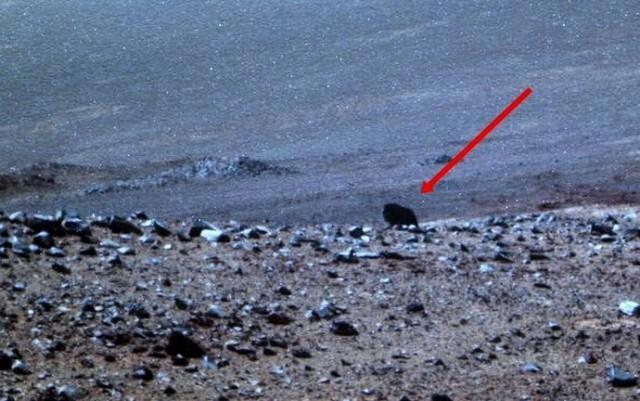 Mars Exploration Rover  обнаружил на Марсе живое существо