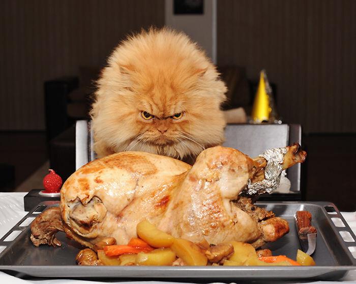 Самый сердитый кот, которого вы когда-либо видели
