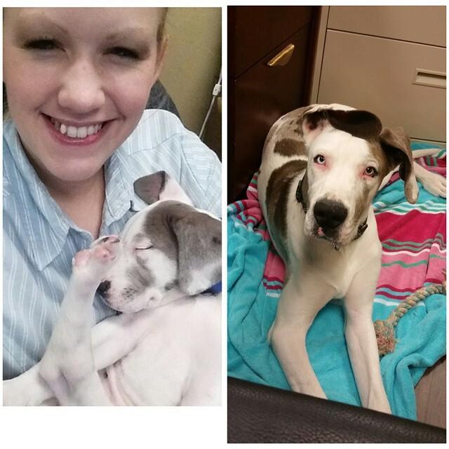 23 щенка, которые очень быстро выросли