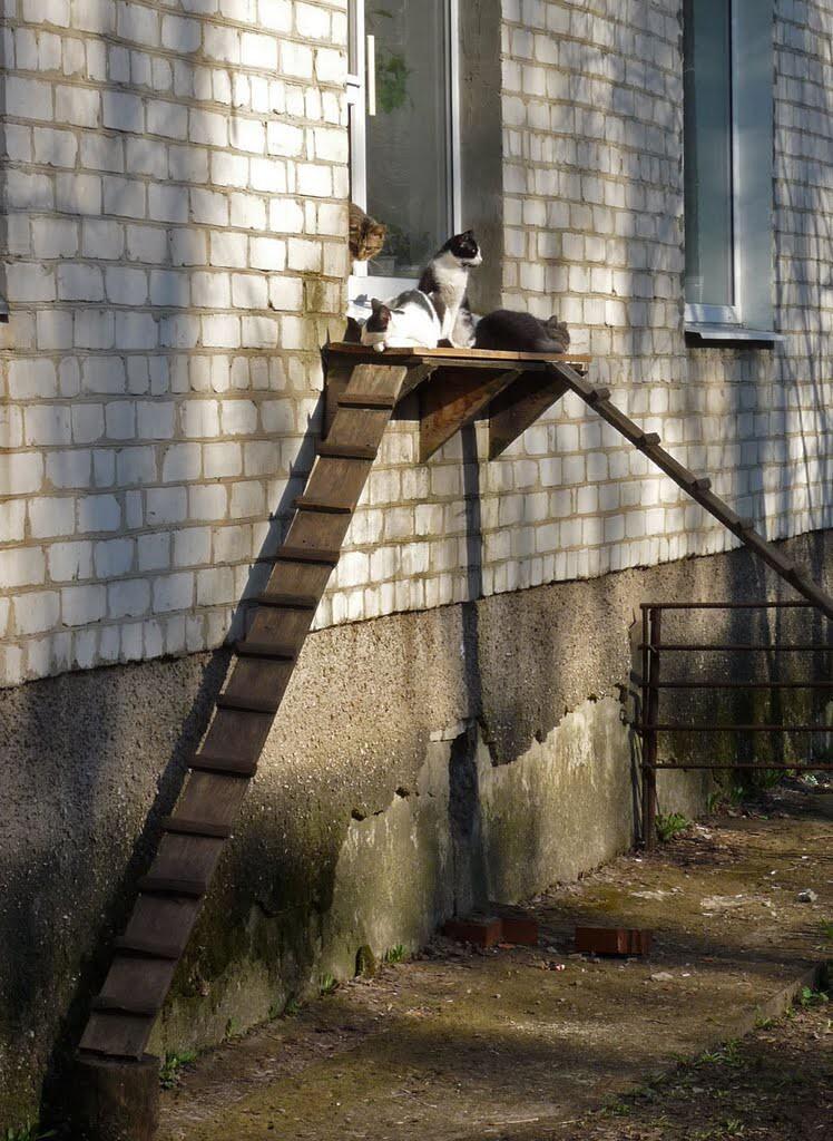 Лестницы для кошек: изобретения любящих хозяев