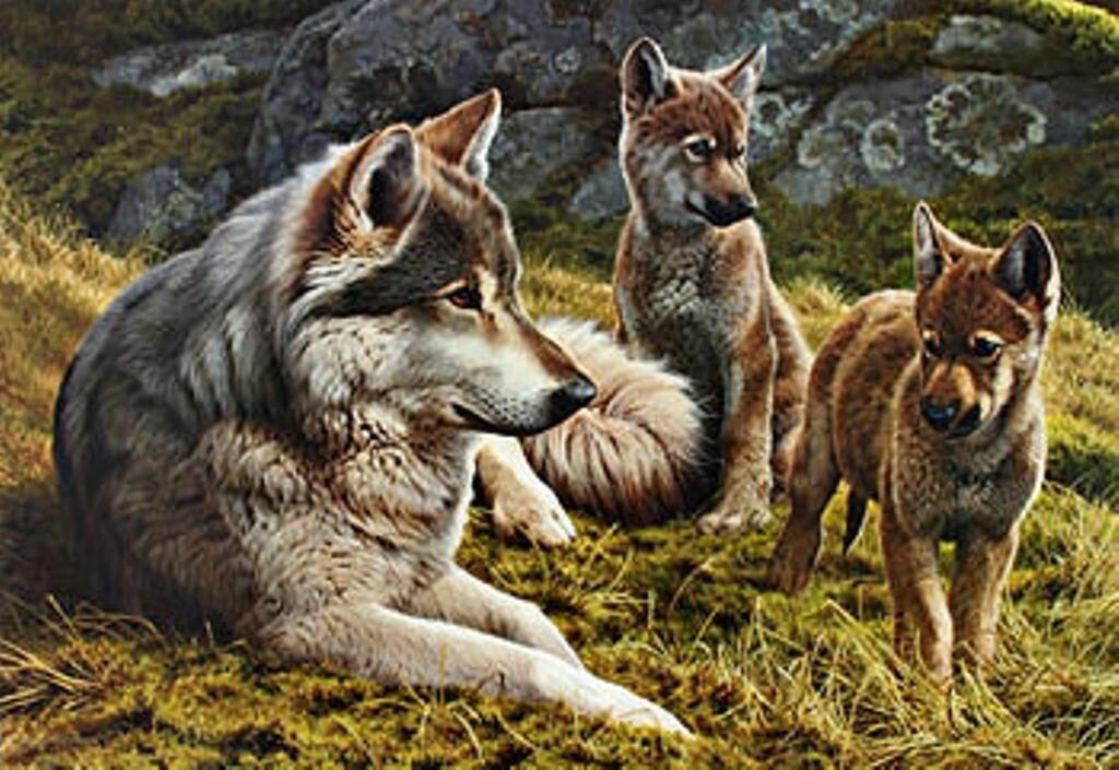 Волки на картинах Эндрю Хатчинсона