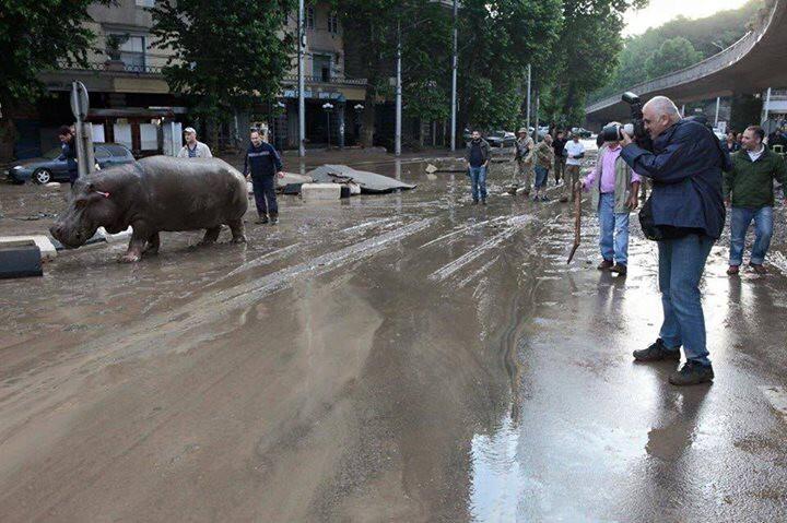 В Тбилиси из за наводнения из зоопарка сбежали дикие животные