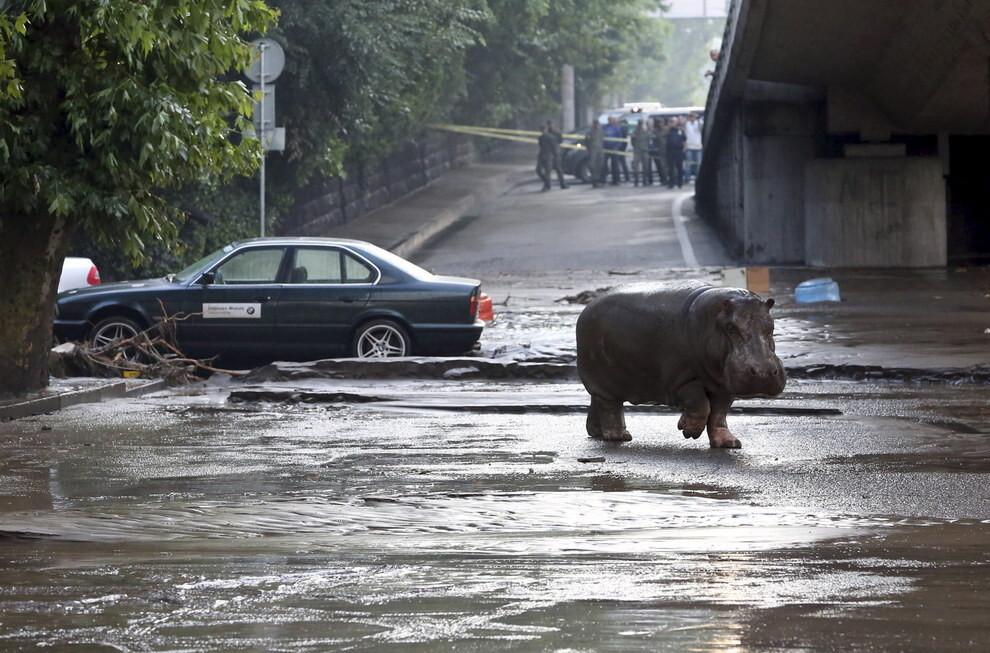 Животные Тбилисского зоопарка на свободе