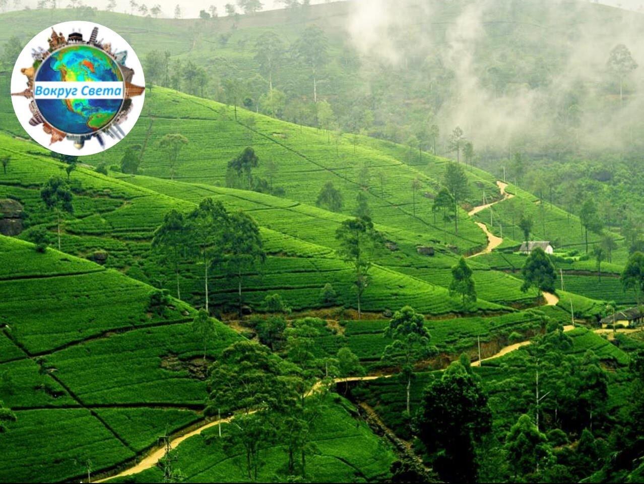 Шри-Ланка: покупки, достопримечательности, еда. Вокруг Света