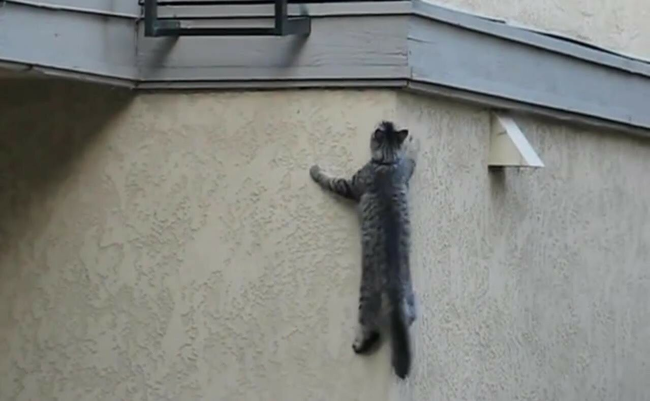 Кот форсирует дом