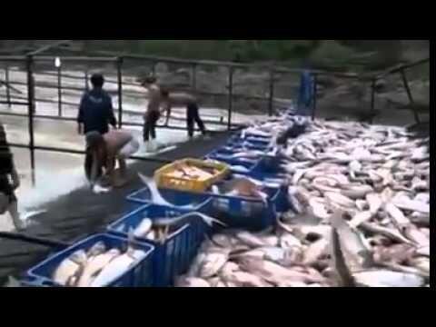 Рыбалка 80 lvl