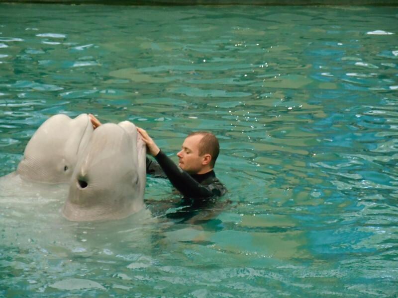 Дельфины под руководством своего инструктора