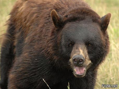 Медведь, которого содержат в клетке возле одного из кафе-шашлычных в Томске, ...
