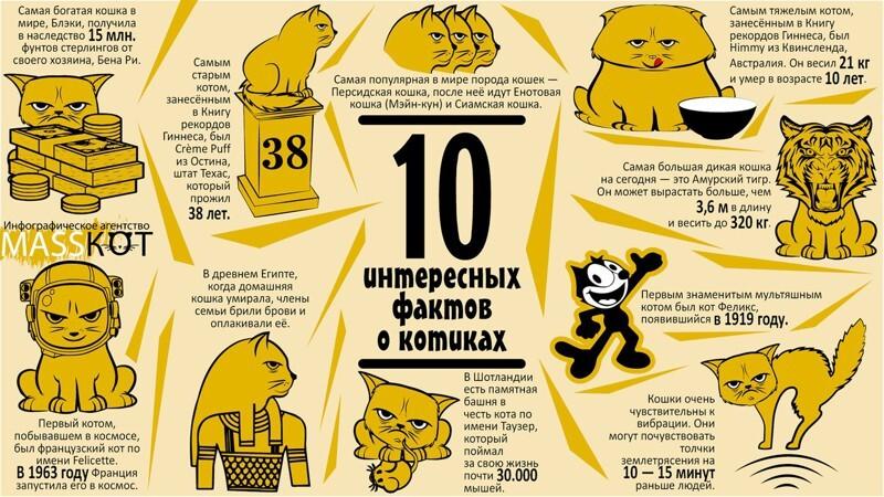 10 интересных фактов о котиках