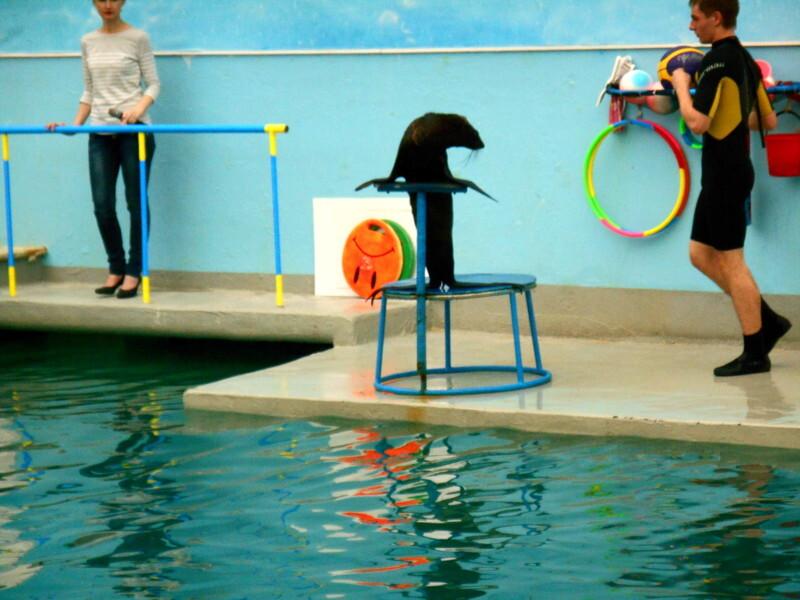 Маленькие детки - тюленятки в большом дельфинарии
