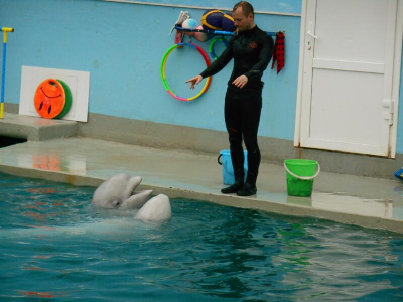 В дельфинарии города Кисловодска идут показательные выступления