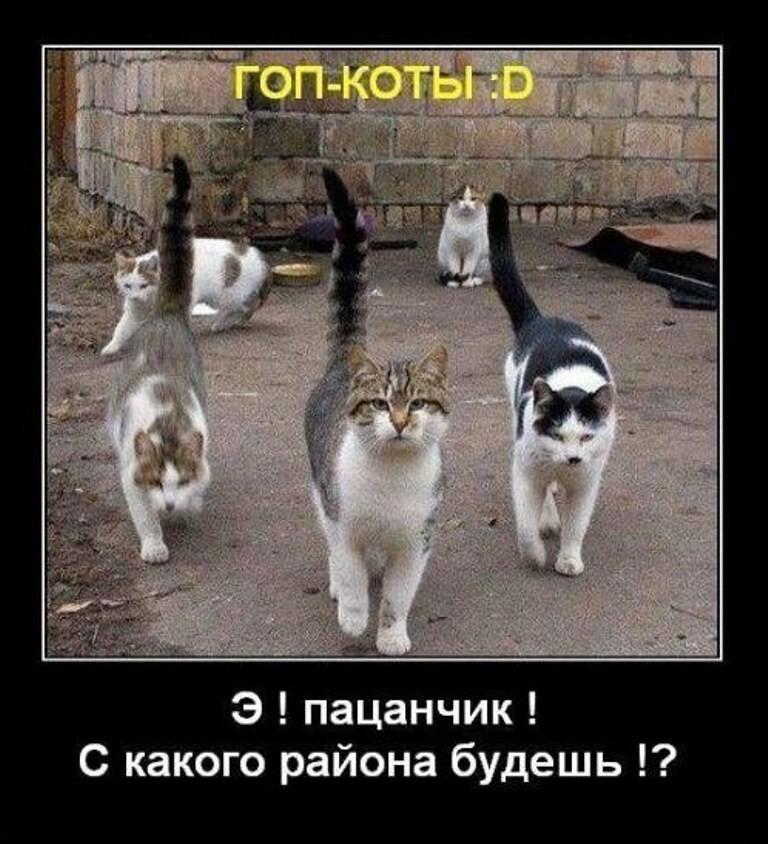 Кот гопник против собаки Приколы с котами