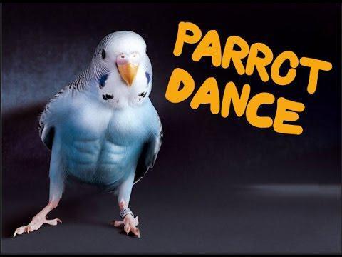 Грязные танцы попугаев!