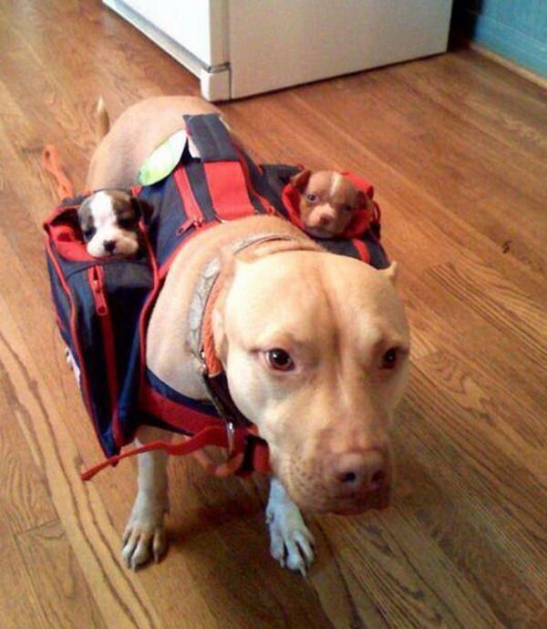 Как собачке погуляться со своими детками?