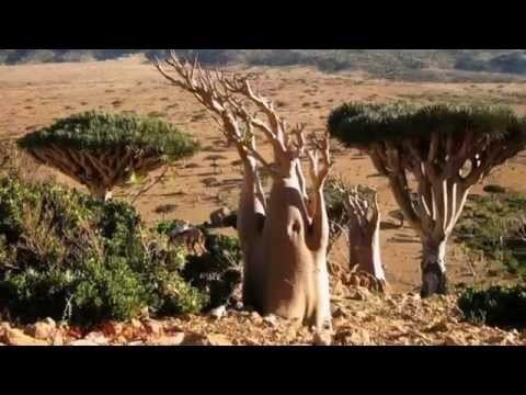 Остров Сокотра Йемен словно другая планета