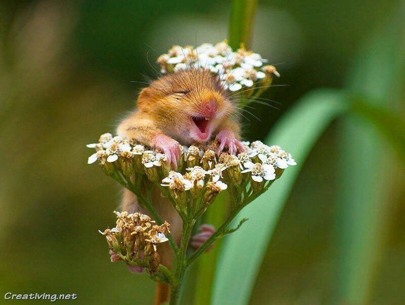 24 фото просто неотразимых крохотных мышат